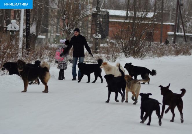 Бродячие собаки: угроза или друг человека?